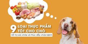9-loai-thuc-pham-ho-tro-va-thuc-day-tri-benh-cho-cho-ban-nen-biet
