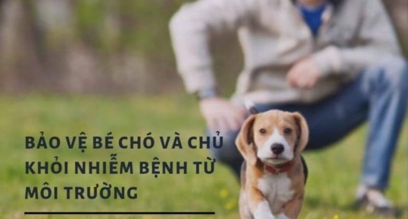 mach-ban-cach-giup-cho-cung-cua-ban-khong-bi-nhiem-benh-tu-moi-truong3