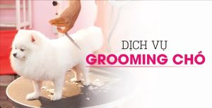 lam-dep-cho-thu-cung-cung-dich-vu-spa-grooming-cua-pet-thi-thi