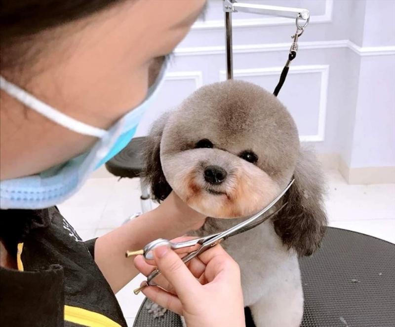 Dịch vụ cắt tỉa lông chó