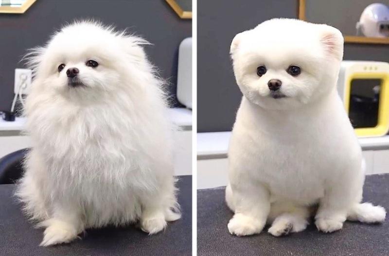 Dịch vụ cắt tỉa lông chó giúp cho cún cưng đẹp hơn