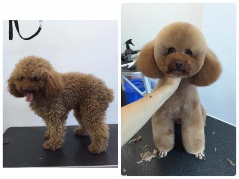 Dịch vụ cắt tỉa lông chó chi phí vừa hợp lý vừa mang lại sản phẩm tuyệt vời