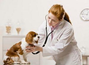 7 lý do cần khám thú y định kỳ cho chó mèo