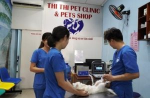 Dịch vụ triệt sản mèo tận nhà uy tín và an toàn tại thú y Thi Thi