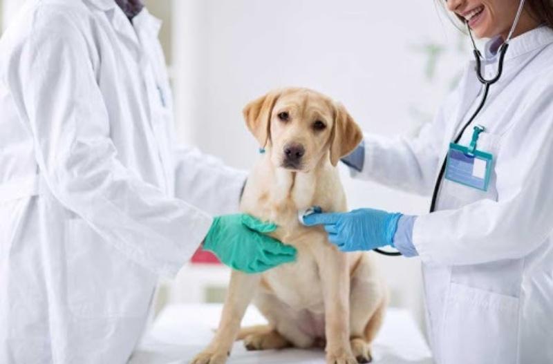 Dấu hiệu nên đến đưa thú cưng đến phòng khám chó mèo