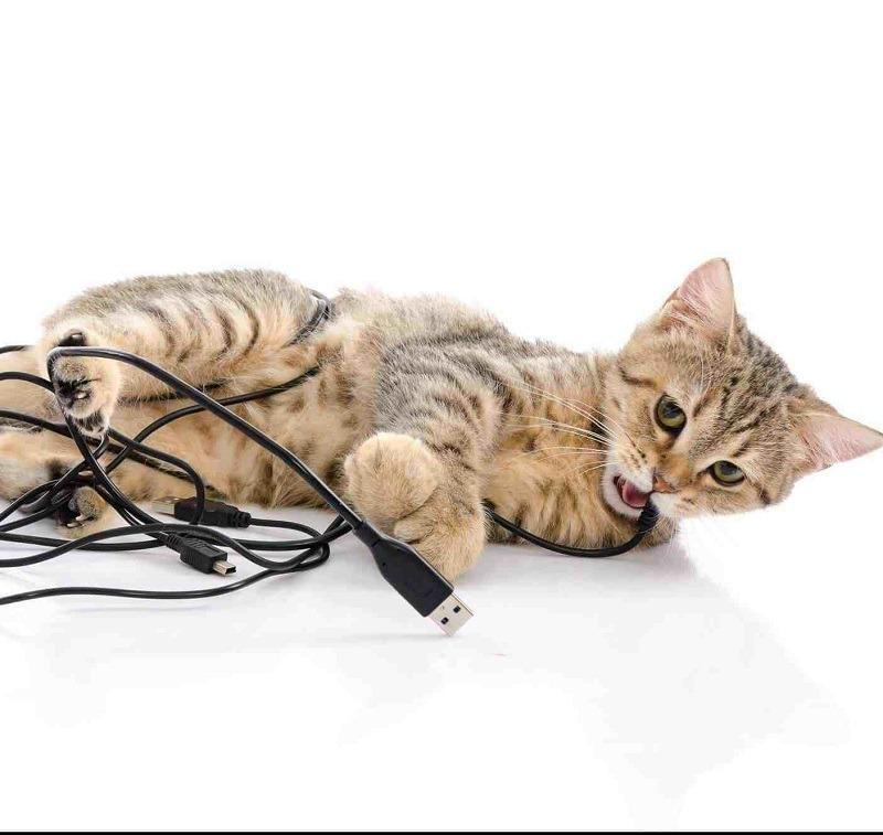 Cất dây điện khỏi tầm mắt của thú cưng