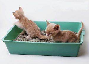 Cách dạy mèo đi vệ sinh vào thau cát