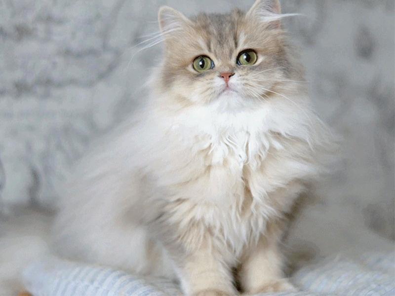 Thức ăn riêng cho mèo sẽ cung cấp đầy đủ dinh dưỡng cho các bé hoạt động