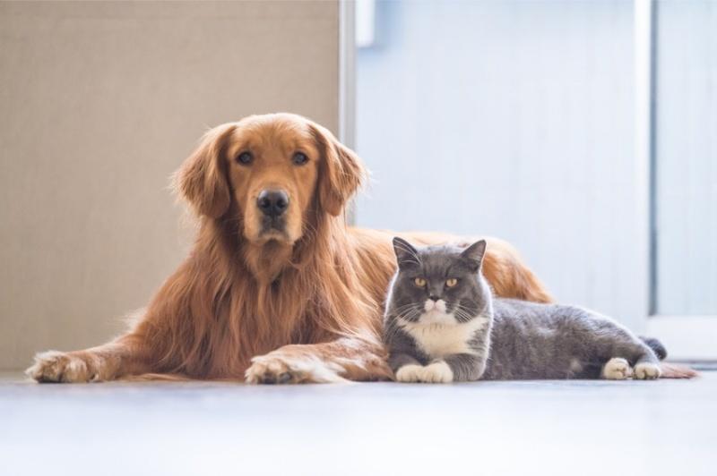 Mỗi giống mèo lại có tính cách khác nhau do đó hành vi của chúng cũng khác nhau.
