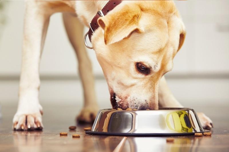 Trứng vịt lộn được nấu chín sẽ loại bỏ những tác nhân gây hại đến hệ tiêu hóa của cún cưng.