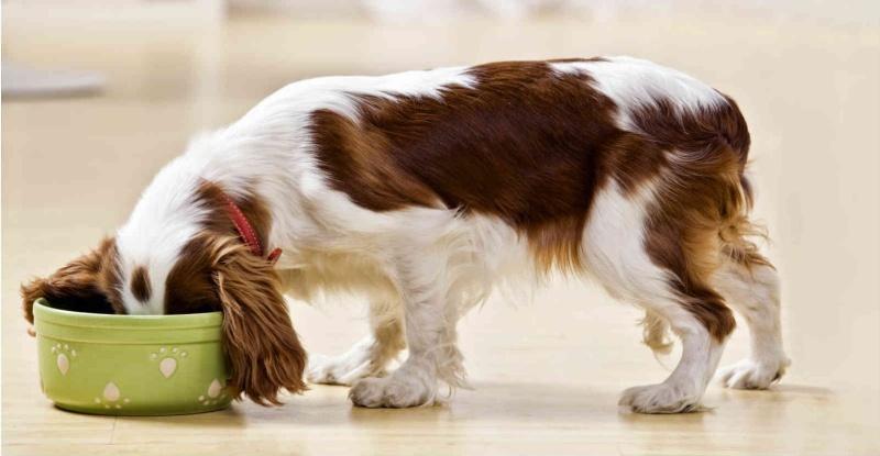 Khi cho chó ăn trứng vịt lộn bạn cần chú ý để tránh ảnh hưởng đến sức khỏe của bé.