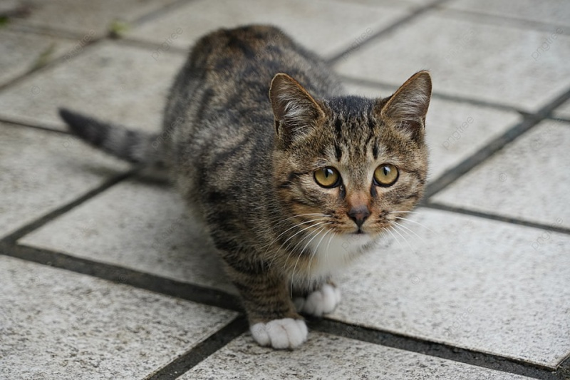 Khả năng nhịn ăn uống của mèo còn phụ thuộc nhiều vào sức khỏe và dinh dưỡng trong cơ thể của chúng.