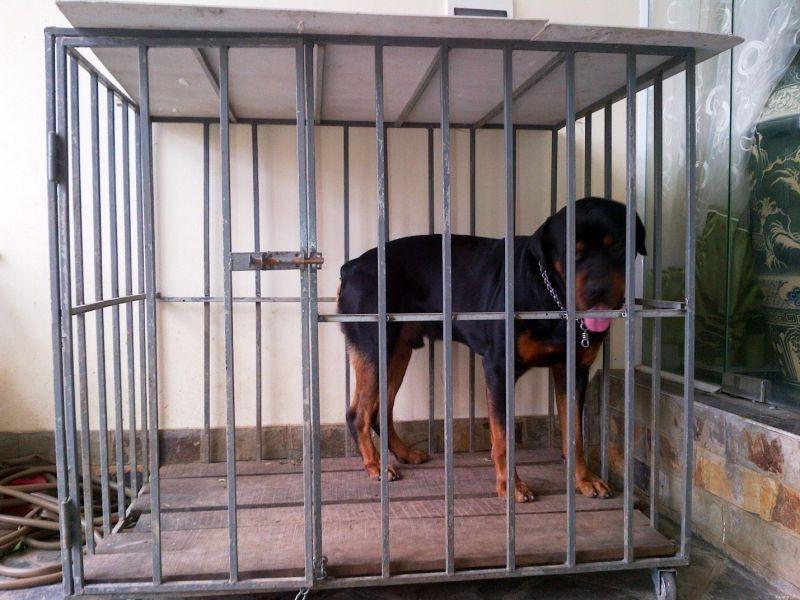 Làm chuồng chó bằng sắt cho chó cưng của mình tiết kiệm và ý nghĩa